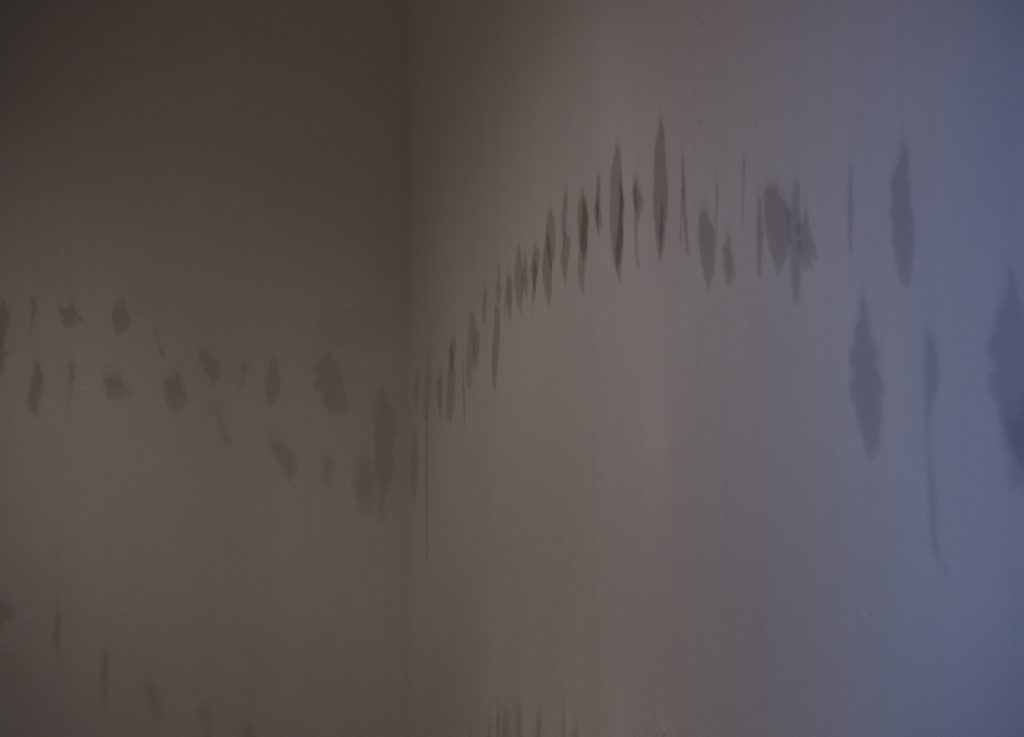 Elva Carroll, installation view, image courtesy of the artist.